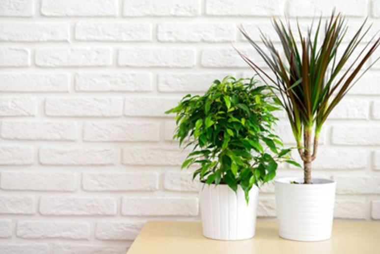 5 Easy-to-Manage House Plants