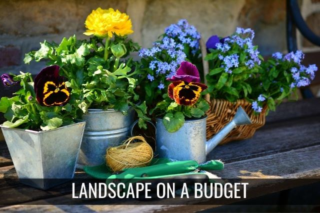 How to Landscape on a Budget