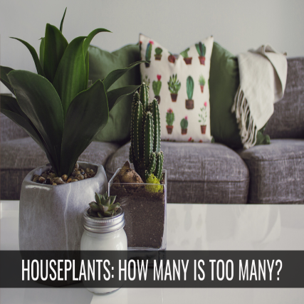 10 Signs You Have Too Many Houseplants